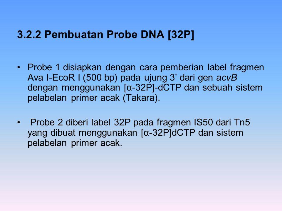 3.2.2 Pembuatan Probe DNA [32P]